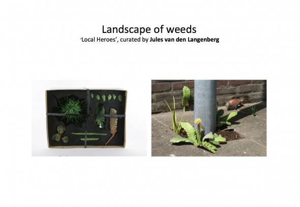 lanscape of weeds